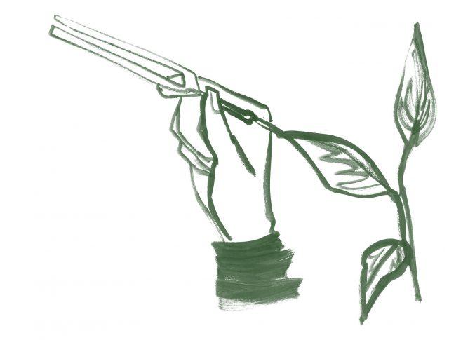 Mà agafant un diapasó per mesurar el so d'una planta